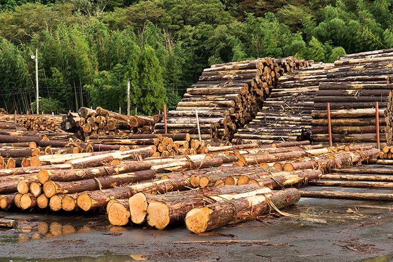 La gestió forestal sostenible és fonamental per a la millora dels hàbitats i la biodiversitat
